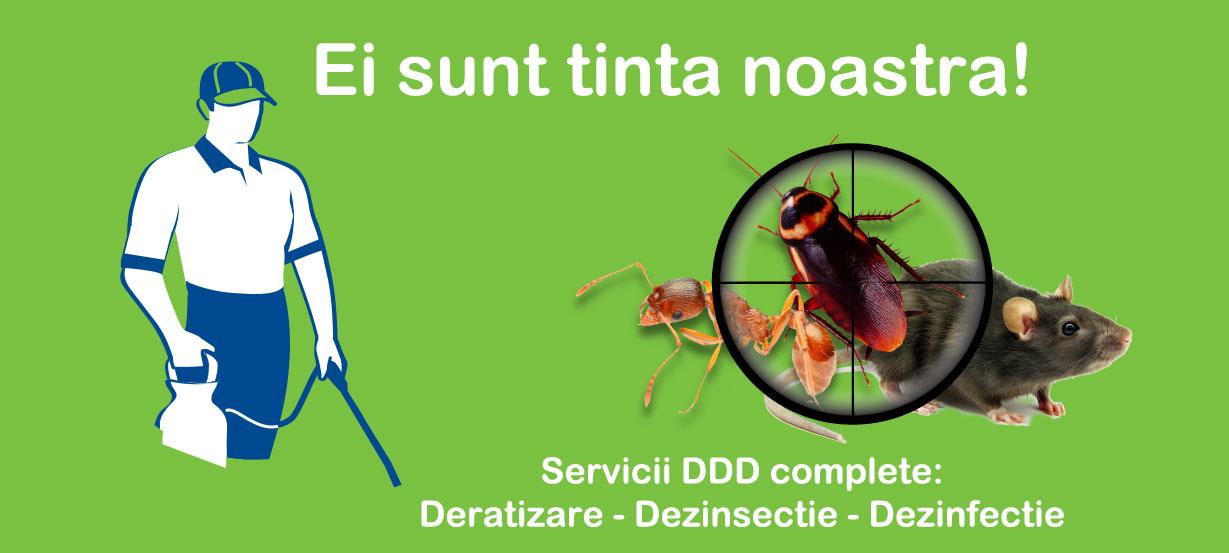 servicii-ddd-bucuresti